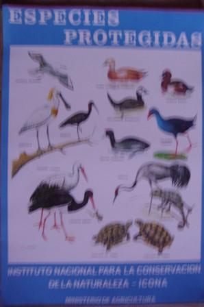 Especies protegidas, Cartel Instituto Nacional para la Conservación de la Naturaleza-Ic