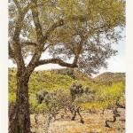 Posta de Mogarraz. Viña y olivos